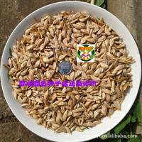 雪松种子 香柏雪种子 香柏种子 喜马拉雅雪松种子(1公斤)