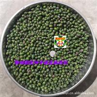 罗汉松种子 罗汉杉种子 长青罗汉杉种子 土杉种子(1公斤)