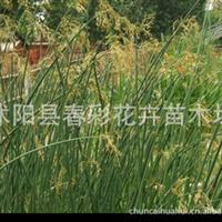 花卉苗木、水生花卉/水生植物/、水培植物、水�[/基地直�N