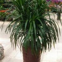 室内植物租赁,室内植物出租,室内植物租摆摆放
