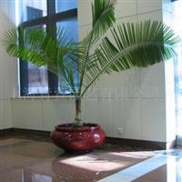 室内绿化租赁,室内绿化出租,室内绿化租摆摆放