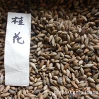 【苏北种业】桂花种子,绿化苗木农户直销。2012新采种子