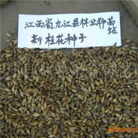 供应优质桂花种子