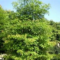 供��四季常�G�溟�木