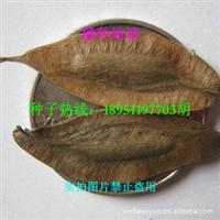 杜仲种子 丝楝树皮 丝棉皮 棉树皮 胶树 播种地球 优质实拍