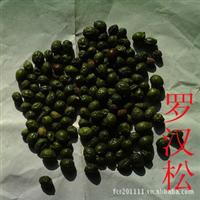 出售当年新采盆景种子罗汉松种子58一斤