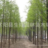 供应【水杉】水杉价格,水杉直销