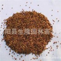 大量供应高贵 红豆杉种子  价格优惠