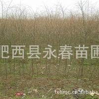 供应树形优美依依袅袅胸径1-8公分青皮 垂柳,倒挂柳苗木