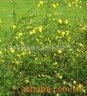 供应迎春、迎夏等绿化苗木