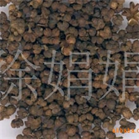 常年大量供��白�g、杜英、�B�N、玉簪、�R棘等花卉�N苗