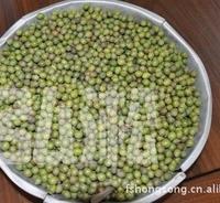 台湾罗汉松种子