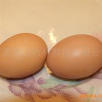 供��高品�|高�I�B沙棘�u�u蛋
