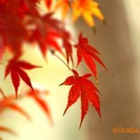 绿化苗木 山东 济南提供7公分红枫及其他苗木
