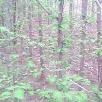 供应水杉,开心果、木瓜等苗木,绿化苗木,种苗