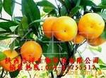 供应柑橘提取物/柑橘黄酮/Citrus reticulata Banco