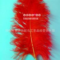 鸵鸟毛,批发鸵鸟毛,彩色鸵鸟毛,各规格鸵鸟毛