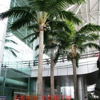玻璃钢仿真椰子树立特价防真椰子树 椰子树 真椰子 椰子树 椰子果
