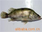 供应桂花鱼