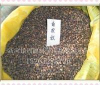 2011年新种  低价特供  白皮松种子