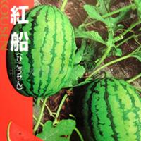 飞红船-日本进口高品质小玉西瓜
