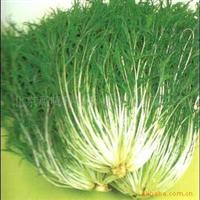 日本京水菜种子-水晶菜种子-千筋菜种子