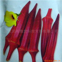 红秋葵种子