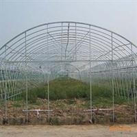 专业温室工程承建/单栋温室大棚