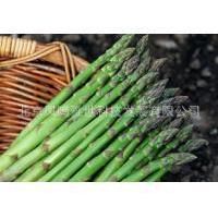 进口芦笋种子 50粒/包 温度的适应性很强