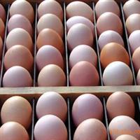供���N蛋