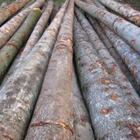 【产品供应】大量供应欧洲进口优质云杉