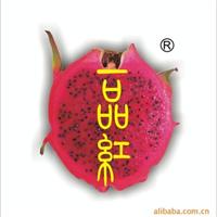 长期大量供应红肉火龙果及火龙果苗