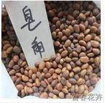 批发皂角种子/较新皂角种子价格/皂角种苗