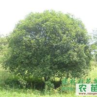 桂花镇合作社