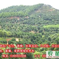 桂花  宣城桂花、安庆、铜陵、六安、巢湖、池州桂花