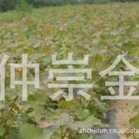 批发葡萄种苗葡萄树葡萄种子绿化用葡萄树及各种果园用果树苗