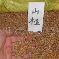 供应优质山楂种子,水果种子,山楂种子价格,山楂种子图片