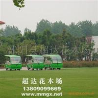 工程草坪种子庭院绿化种子早熟禾种子低价出售保质保量