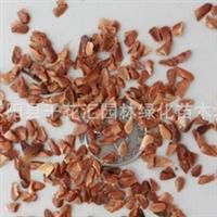 批发香椿种子红油香椿种子香椿头净种子芽苗菜