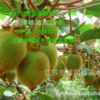 出售【猕猴桃苗】猕猴桃种子樱桃苗葡萄苗等各种果树苗批发