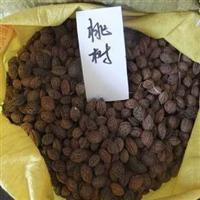 批发优质果树苗种子毛桃种子桃树种子粒大饱满量大从优