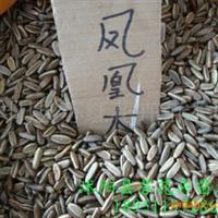 供应花卉种子木芙蓉种子马褂木种子,石楠种子