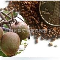 批发供应优质猕猴桃种子当年新采保质保量货到付款