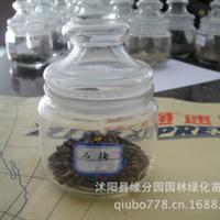 供应优质石楠种子种苗