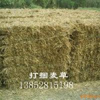 供应饲草用稻草秸秆、玉米秸杆、小麦草秸秆