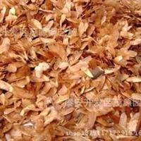 批发香椿种子,香椿树苗种子,泰山红油香椿树种子,大量有售