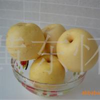 大量销售供应优质嫁接黄冠梨果树苗批发黄冠梨树苗木