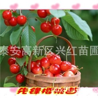 出售潍坊草莓苗、潍坊苹果苗、潍坊梨树苗、潍坊樱桃苗、核桃苗
