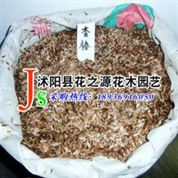 批发供应优质香椿种子本香椿生长速度快