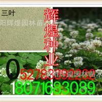 出售:白三叶种子红三叶种子(保质保量货到付款)